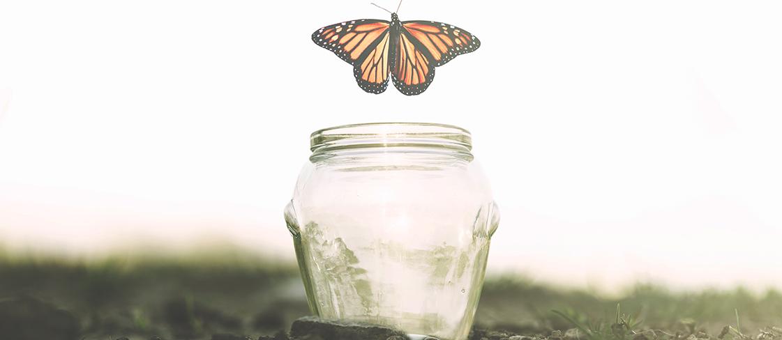 butterfly_wide